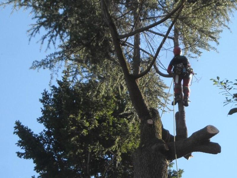 Interventi-in-arrampicata-su-alberi