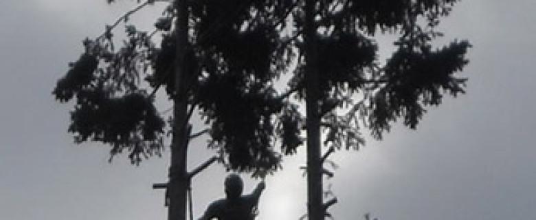 Interventi in arrampicata su alberi