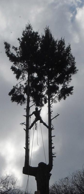 Interventi-in-arrampicata-su-alberi1