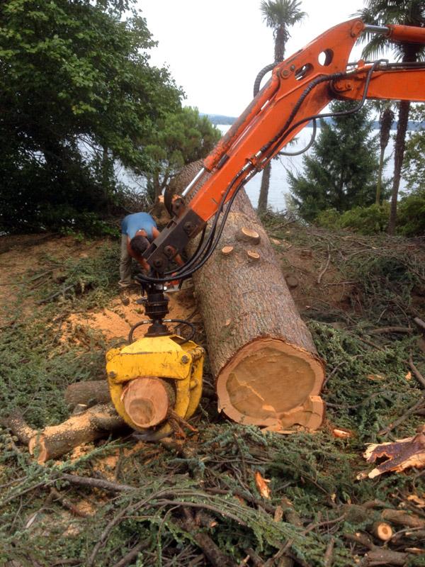 abbattimento alberi (1)