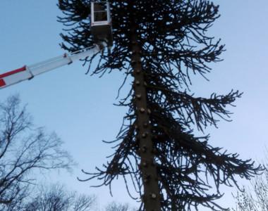 Abbattimento alberi e interventi forestali