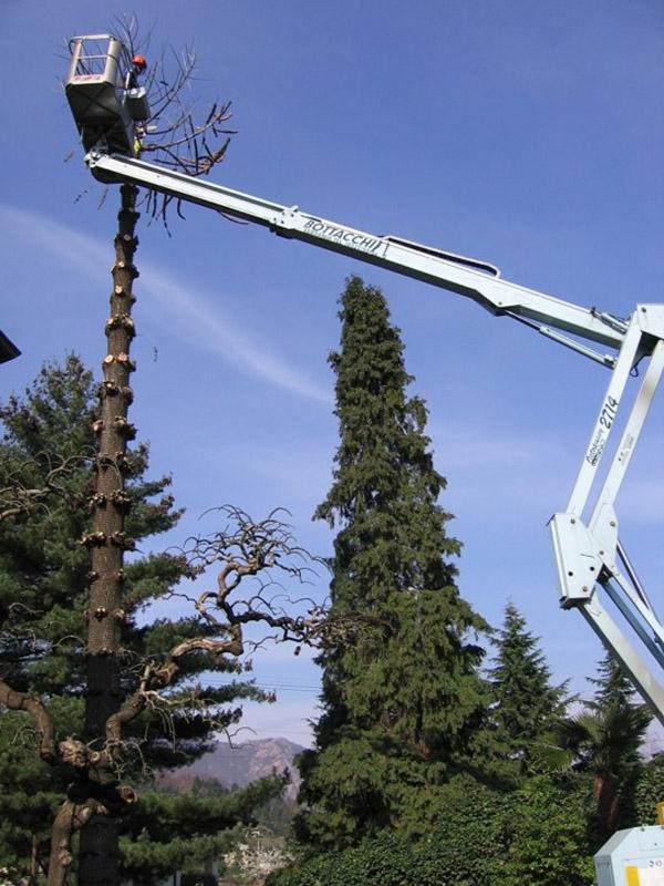 abbattimento alberi (3)
