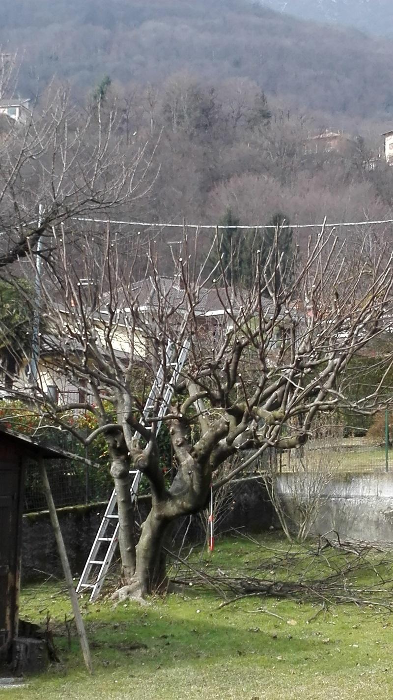 potatura alberi (3)