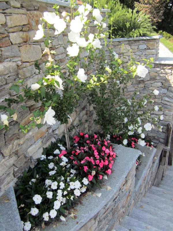fioriture stagionali (3)