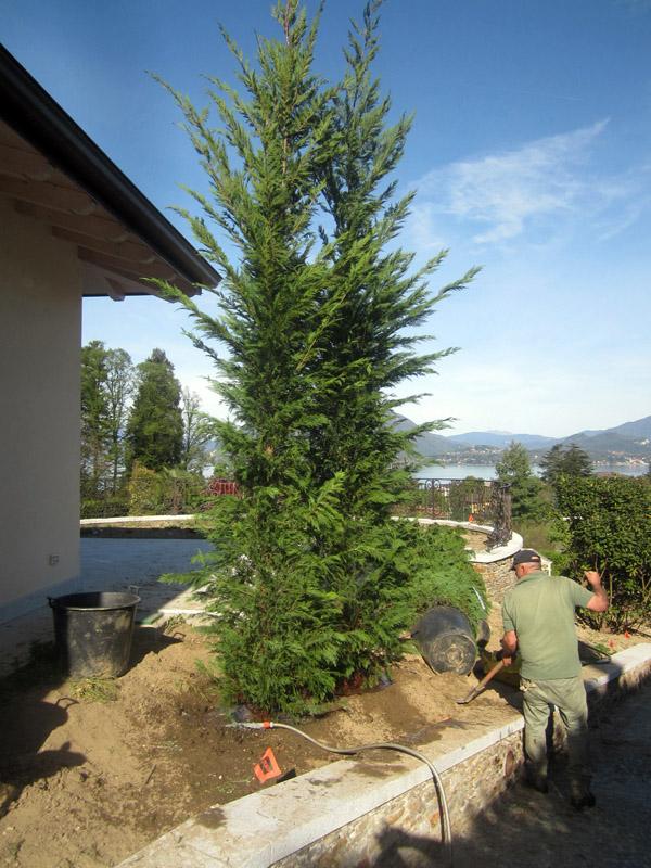 impianto arbusti (2)