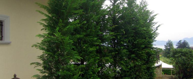 Impianto arbusti e alberi