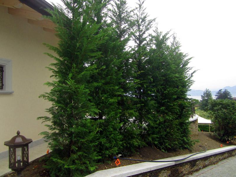 impianto arbusti (3)