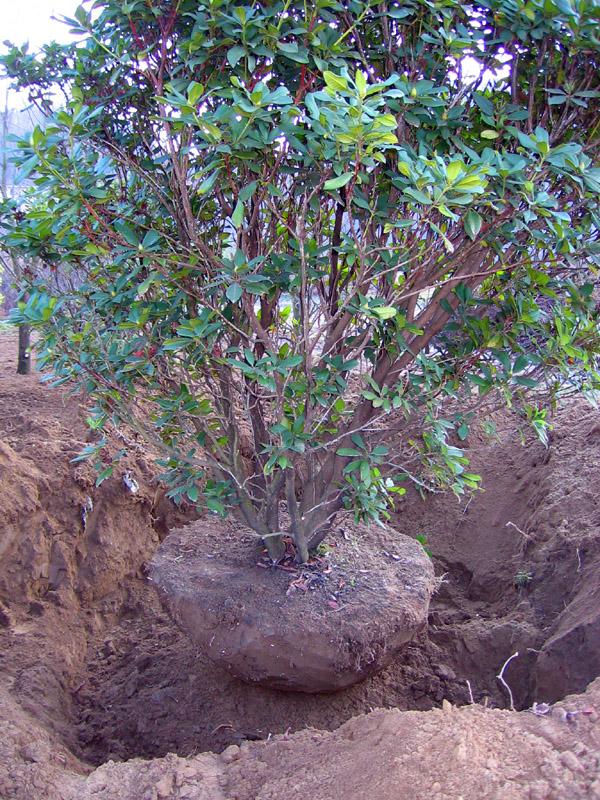 impianto arbusti (4)