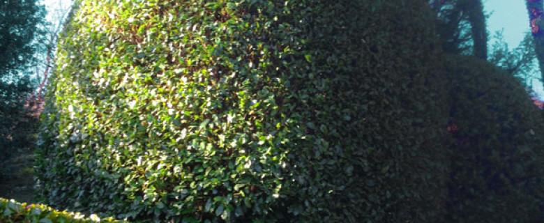 Potature siepi e arbusti